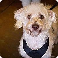 Adopt A Pet :: Eli - Orange, CA