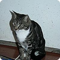Adopt A Pet :: Jasper - Santa Rosa, CA