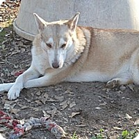 Adopt A Pet :: Frankie - E Windsor, CT