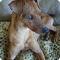 Adopt A Pet :: Long John Silver - Nashville, TN
