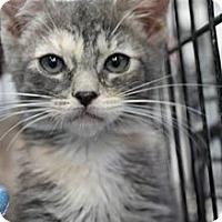 Adopt A Pet :: zoe - Santa Monica, CA