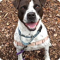 Adopt A Pet :: Cookie - Briarcliff Manor, NY