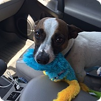 Adopt A Pet :: Dexter (courtesy listing) - Richmond, VA