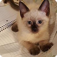 Adopt A Pet :: Princess Leah - Ocala, FL