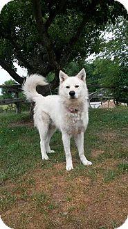 Alaskan Malamute/Siberian Husky Mix Dog for adoption in Tweed, Ontario - Brock