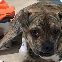 Adopt A Pet :: Moby Dick - Orlando, FL