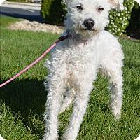 Adopt A Pet :: Joel - Meridian, ID