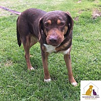 Adopt A Pet :: Dee Dee - Eighty Four, PA