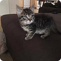 Adopt A Pet :: Tawny's Litter - Daleville, AL