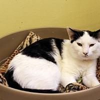 Adopt A Pet :: Mario Pampa - Denver, CO