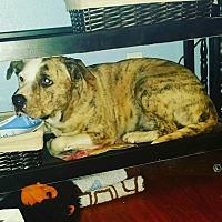 Adopt A Pet :: Daisy - Rowlett, TX