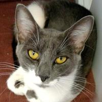 Adopt A Pet :: Blue Hawaii - Rio Rancho, NM