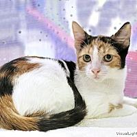 Adopt A Pet :: Henricha - Westchester, CA