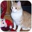Photo 1 - Domestic Shorthair Cat for adoption in Owatonna, Minnesota - Mulligan