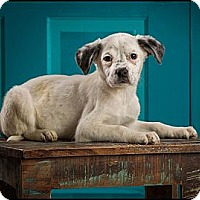 Adopt A Pet :: Winnie - Owensboro, KY