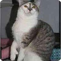 Adopt A Pet :: Kelly - Marietta, GA