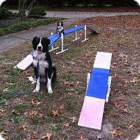 Adopt A Pet :: Beau - Columbia, SC