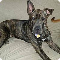 Adopt A Pet :: Kensie in TX - Apple Valley, CA