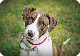 Pointer Mix Dog for adoption in Marietta, Georgia - Edalaine