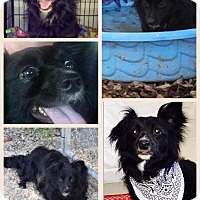 Adopt A Pet :: Cheerio - Donaldsonville, LA