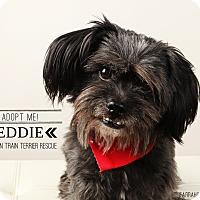 Adopt A Pet :: Eddie-pending adoption - Omaha, NE