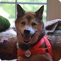 Adopt A Pet :: Koyo - Manassas, VA