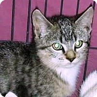 Adopt A Pet :: Mary - Putnam, CT