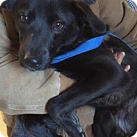 Adopt A Pet :: Potter - New Canaan, CT
