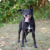 Adopt A Pet :: Zollie - Bristol, TN