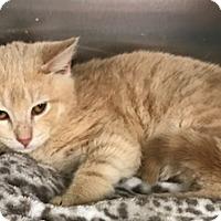 Adopt A Pet :: Catsby - North Highlands, CA