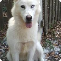 Adopt A Pet :: Razz-ma-Taz - Inverness, FL