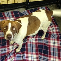 Adopt A Pet :: Chloe - HOLD - Sparta, NJ
