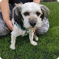 Adopt A Pet :: Aria - sylmar, CA