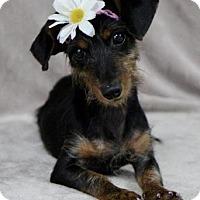 Adopt A Pet :: Karma - Picayune, MS