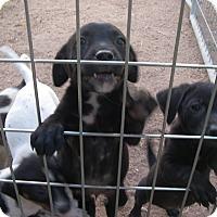 Adopt A Pet :: Sarah - Buchanan Dam, TX