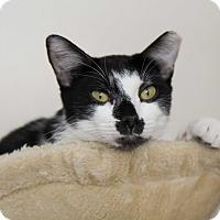 Adopt A Pet :: M & M - Fountain Hills, AZ
