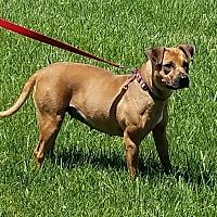 Adopt A Pet :: Fern - Cameron, MO
