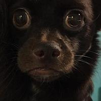Adopt A Pet :: Mona - Raleigh, NC