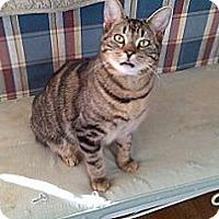 Adopt A Pet :: Bobby - Woodland Hills, CA