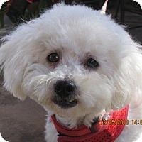 Adopt A Pet :: Olivia - La Costa, CA