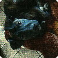 Adopt A Pet :: Carolina - New Washington, IN