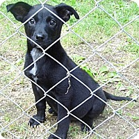Adopt A Pet :: Clark-Reduced Fee $100 - Jarrettsville, MD