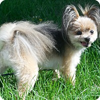 Adopt A Pet :: Coco - Osseo, MN