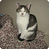 Adopt A Pet :: BELLE - 2014 - Hamilton, NJ