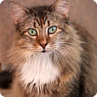 Adopt A Pet :: Zelda - San Antonio, TX