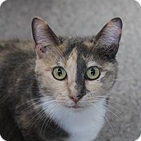 Adopt A Pet :: Zahara - Sarasota, FL