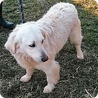 Adopt A Pet :: T4 Amour - BIRMINGHAM, AL