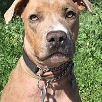 Adopt A Pet :: Sonya - San Diego, CA