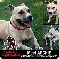 Adopt A Pet :: Archie - Pottstown, PA