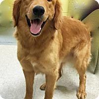 Adopt A Pet :: Kuzy - BIRMINGHAM, AL